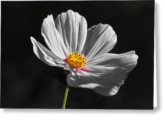 Just A Flower Greeting Card by Mitch Shindelbower