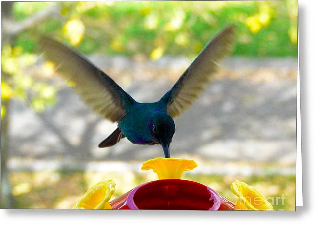 Hovering Greeting Cards - Just A Sip Please Greeting Card by Al Bourassa