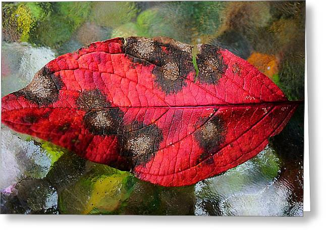 Photographs With Red. Greeting Cards - Just Call It Spot 2012 Greeting Card by Beth Akerman