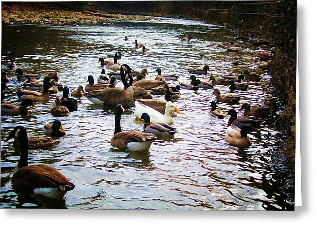 Stream Digital Art Greeting Cards - Just Ducky Greeting Card by Bill Cannon