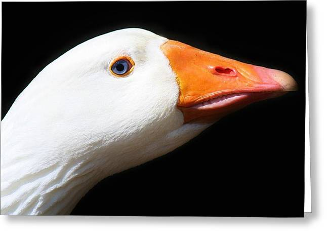 Just Ducky Greeting Card by Paulette Thomas