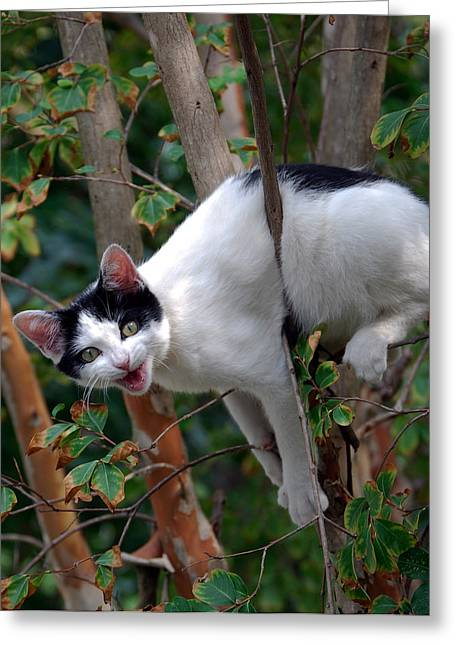 Pictures Of Cats Greeting Cards - Just Hangin Out Greeting Card by Skip Willits