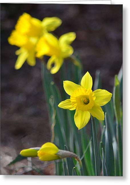 Spring Bulbs Greeting Cards - Just Have To Be Different Greeting Card by Sandi OReilly