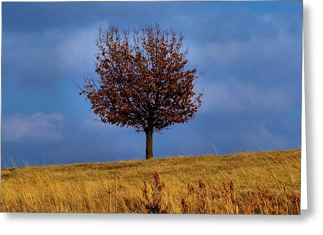 Focal Point Greeting Cards - Just One Greeting Card by Karen M Scovill