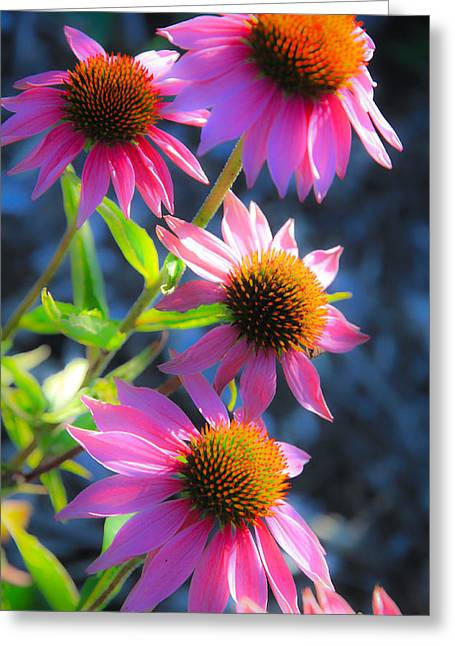 Abstracted Coneflowers Greeting Cards - Just Pink Greeting Card by Steve McKinzie