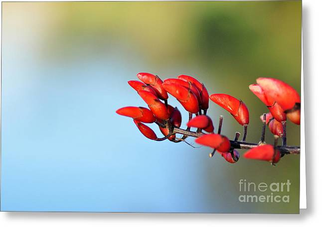Red Bud Trees Greeting Cards - Just Red Buds Greeting Card by Kaye Menner