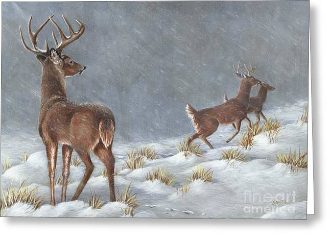 Winter Storm Drawings Greeting Cards - Just watching Greeting Card by Sharon Molinaro