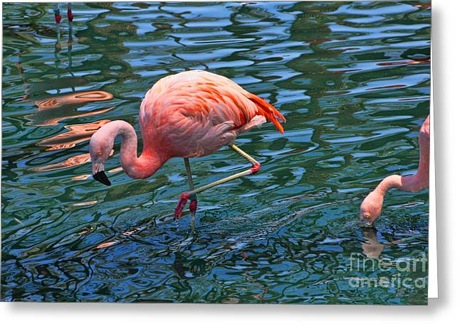 Marriot Greeting Cards - JW Marriot Flamingo Greeting Card by Tommy Anderson