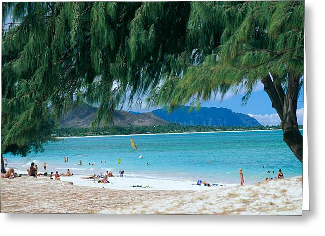 Peter French Greeting Cards - Kailua Beach Park Greeting Card by Peter French - Printscapes