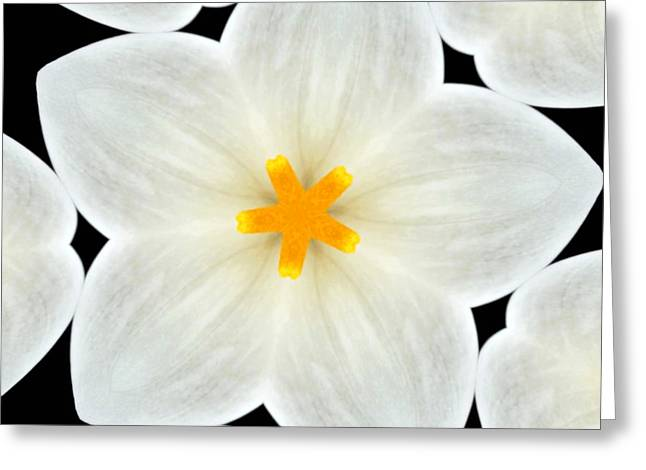 Kaleidoscope Effect Greeting Cards - Kaleidoscope of a Calla Lily Greeting Card by Cathie Tyler
