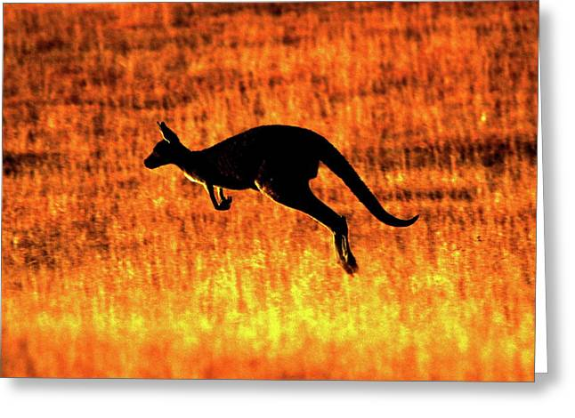 Kangaroo Greeting Cards - Kangaroo Sunset Greeting Card by Bruce J Robinson