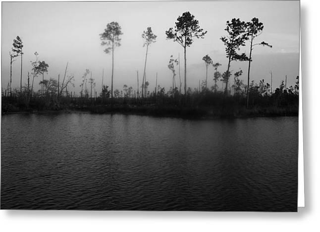 Suzanne Clark Greeting Cards - Katrinas trees Jourdan River Greeting Card by Suzanne E Clark