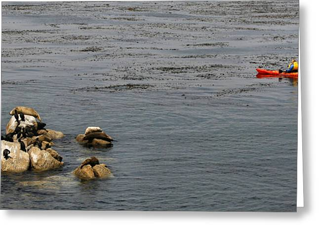 California Sea Lions Greeting Cards - Kayakers and Seal Lions Greeting Card by Marilyn Hunt
