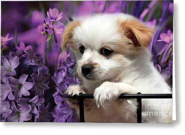 Puppies Photographs Greeting Cards - KC In Flowers Greeting Card by Marjorie Imbeau