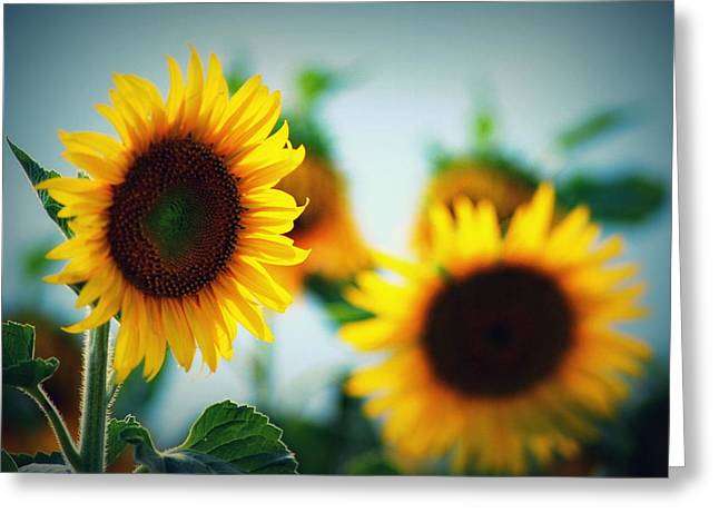 Yellow Sunflower Pyrography Greeting Cards - Keep your face to the sunshine Greeting Card by Julianna Horvath