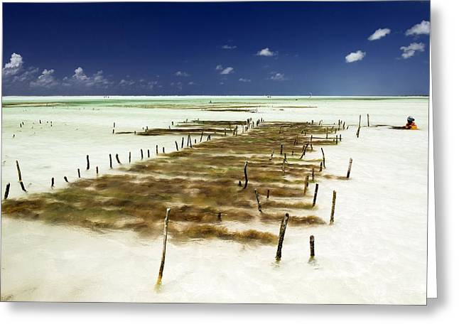 Kelp Farming, Zanzibar Greeting Card by Tony Camacho