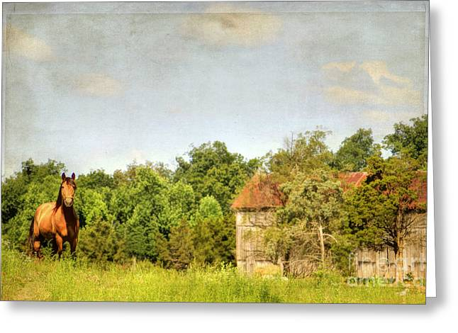 Countrylife Greeting Cards - Kentucky Greeting Card by Darren Fisher