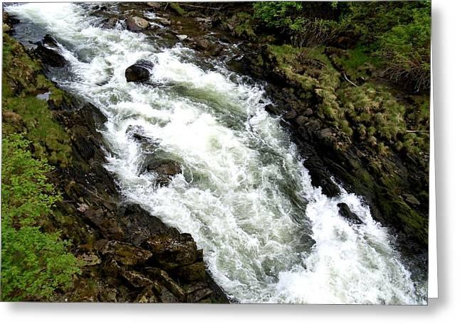 Creekbed Greeting Cards - Ketchikan Creek 1 Greeting Card by Randall Weidner