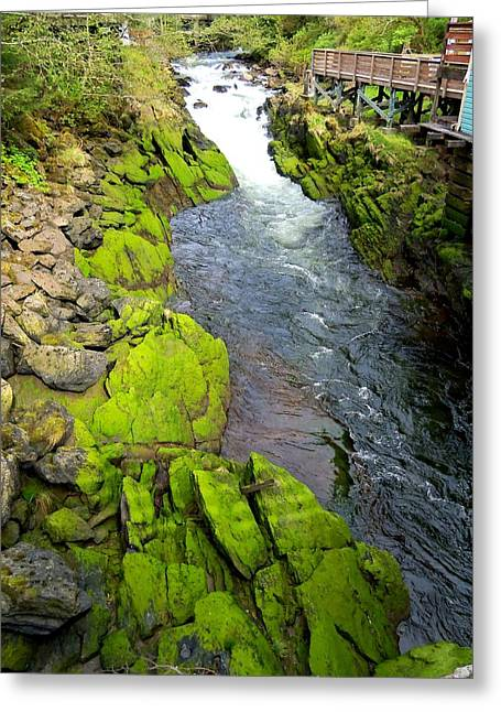 Creekbed Greeting Cards - Ketchikan Creek 3 Greeting Card by Randall Weidner