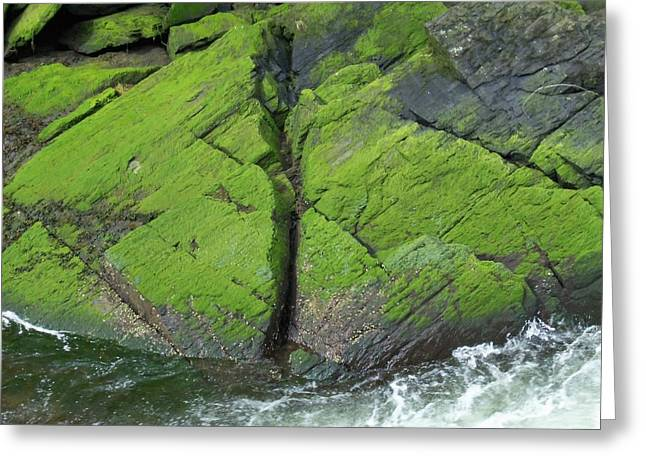 Creekbed Greeting Cards - Ketchikan Creek 4 Greeting Card by Randall Weidner
