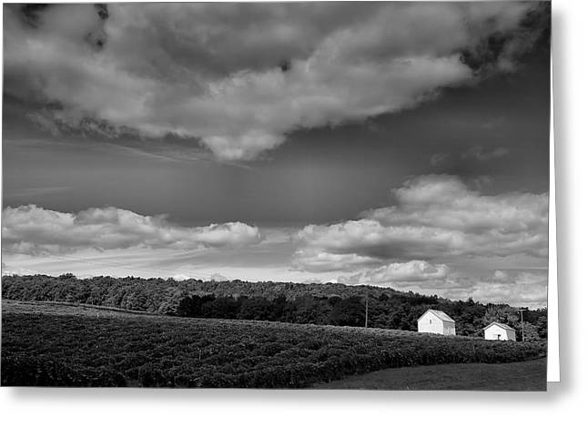 Pastoral Vineyard Greeting Cards - Keuka Landscape VI Greeting Card by Steven Ainsworth