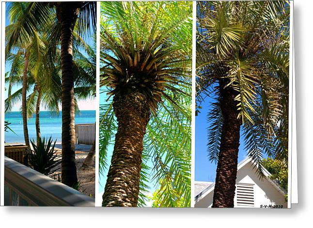 Triplets Greeting Cards - Key West Palm Triplets Greeting Card by Susanne Van Hulst