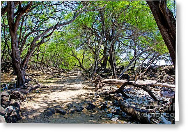 La Perouse Bay Greeting Cards - Kiawe trees -2 Greeting Card by Baywest Imaging