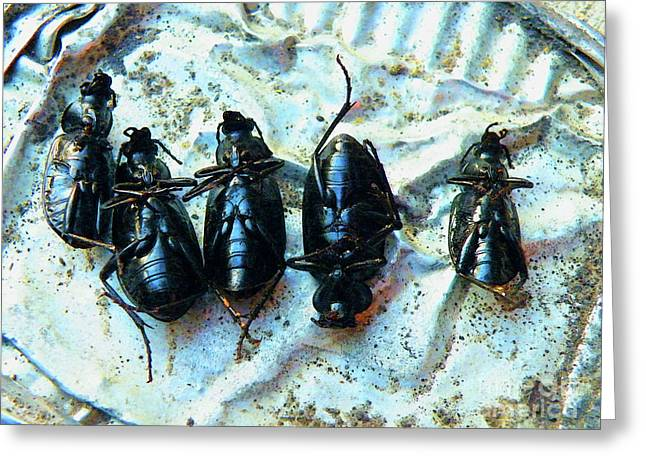 Insect Control Greeting Cards - Kick The Bucket Greeting Card by Joe Jake Pratt
