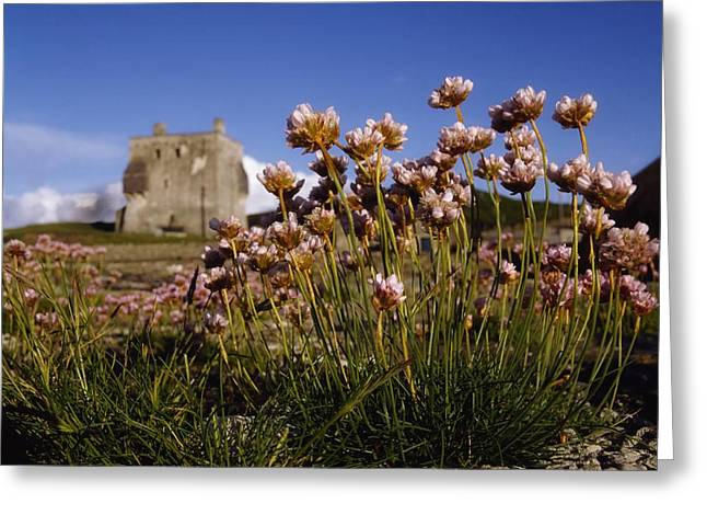 Queen Of The Sea Greeting Cards - Kildownet Castle, Achill Island, Co Greeting Card by The Irish Image Collection