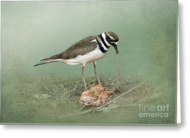 Killdeer Greeting Cards - Killdeer and Worm Greeting Card by Betty LaRue