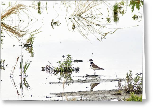 Hunting Bird Greeting Cards - Killdeer Greeting Card by James Steele