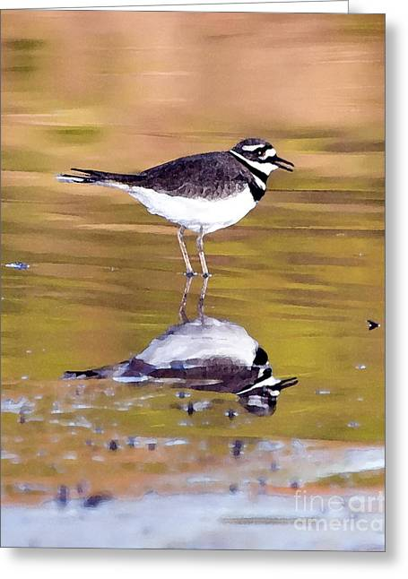 Killdeer Greeting Cards - Killdeer Reflection Greeting Card by Betty LaRue