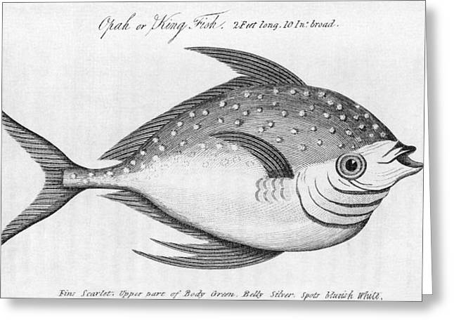 Statistical Greeting Cards - King Fish, Historical Artwork Greeting Card by Middle Temple Library