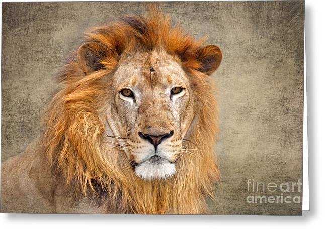 Critically Endangered Species Greeting Cards - King of Beasts portrait of a lion Greeting Card by Louise Heusinkveld