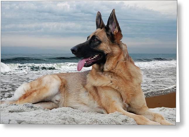 Purebreed Greeting Cards - King Of The Beach - German Shepherd Dog Greeting Card by Angie Tirado