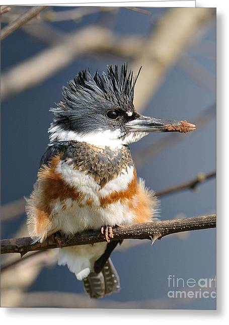 Kingfisher Greeting Card by Craig Leaper