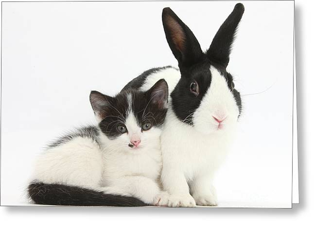 House Pet Greeting Cards - Kitten And Dutch Rabbit Greeting Card by Mark Taylor
