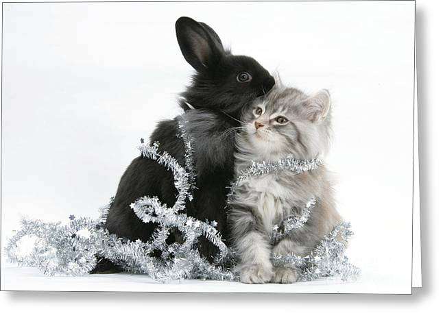 House Pet Greeting Cards - Kitten And Rabbit With Tinsel Greeting Card by Mark Taylor