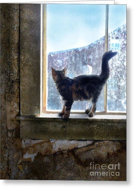 Abandoned Pets Greeting Cards - Kitten on Windowsill of Abandoned House Greeting Card by Jill Battaglia