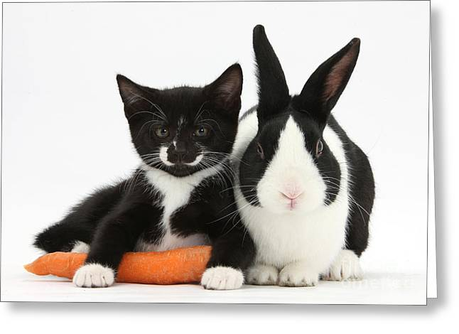 Tuxedo Greeting Cards - Kitten, Rabbit And Carrot Greeting Card by Mark Taylor