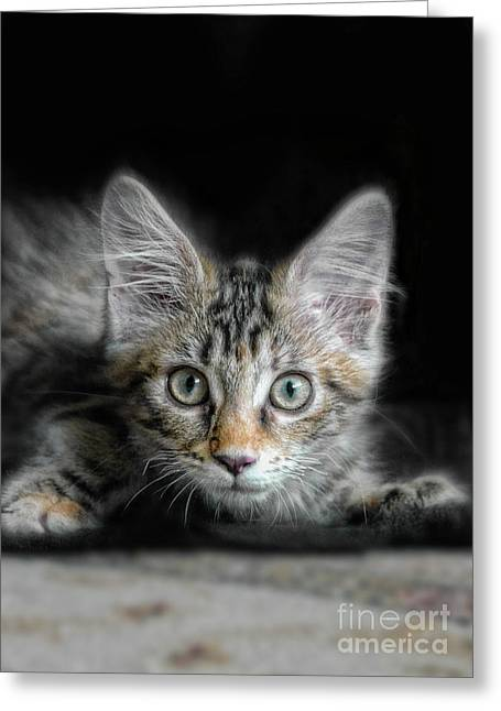 Wide-eyed Greeting Cards - Kitten Ready to Pounce Greeting Card by Jill Battaglia