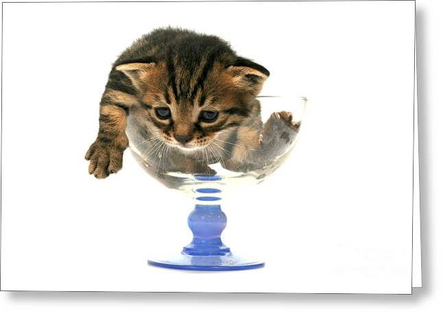 Cramped Greeting Cards - Kitten Sits In A Glass  Greeting Card by Yedidya yos mizrachi