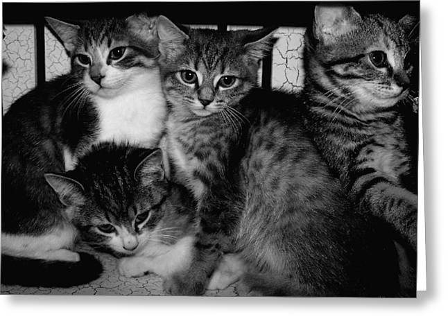 Photos Of Cats Digital Greeting Cards - Kittens Corner Greeting Card by Christy Leigh