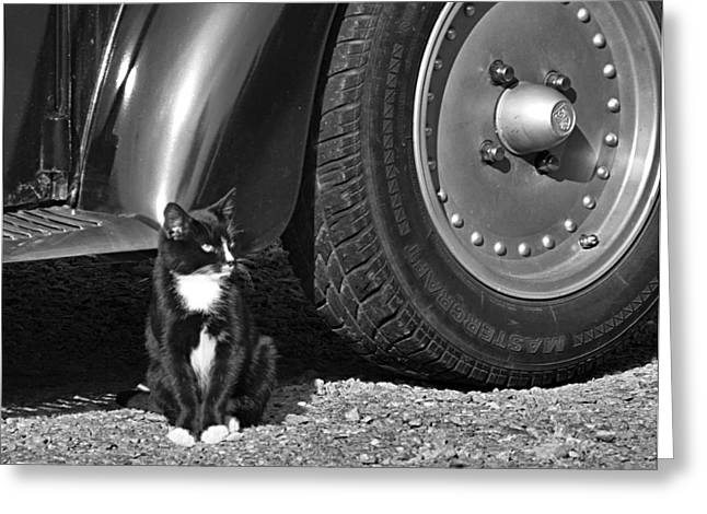 Beetle Cat Greeting Cards - Kitties and Wheels in Black and White Greeting Card by Kathy Clark