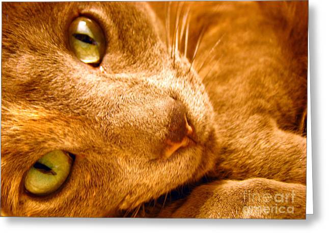 Cat Eyes Greeting Cards - Kitty Greeting Card by Amanda Barcon