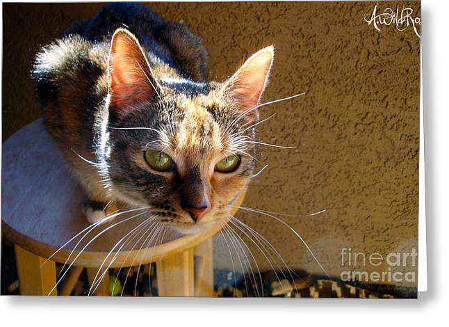 Kitteh Greeting Cards - Kitty face Greeting Card by Awildrose Photography