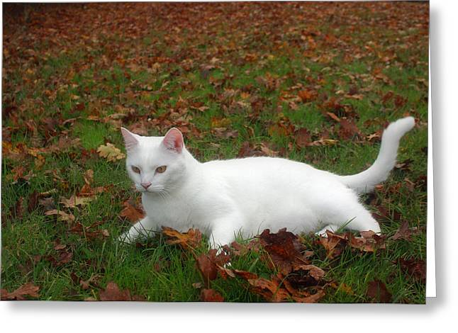 Kitty In The Leaves Greeting Card by Tyra  OBryant