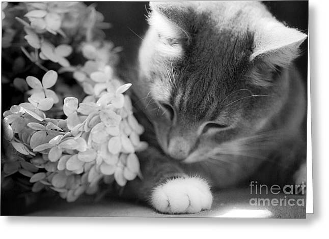Leslie Leda Greeting Cards - Kitty Greeting Card by Leslie Leda