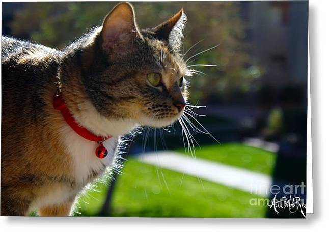 Kitteh Greeting Cards - Kitty outside Greeting Card by Awildrose Photography