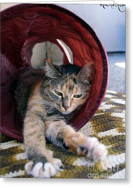 Kitteh Greeting Cards - Kitty Tunnel Greeting Card by Awildrose Photography